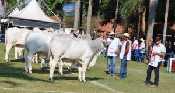 Deu no Campo Grande News: Acrissul retoma feira agropecuária seis anos após ser suspensa em MS