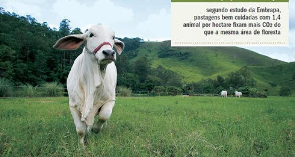 No país da pecuária, pasto é usado contra o aquecimento global