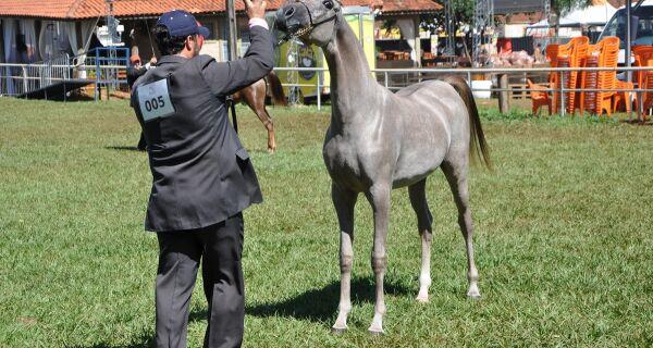ExpoMS Rural recebe Exposição Estadual do Cavalo Árabe no sábado, 27