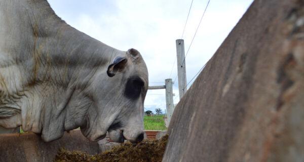 Preço do boi gordo atinge R$ 140/@ em MS, com alta de 4,4% frente a 2015