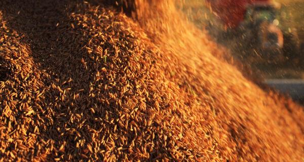 Produção de grãos deve registrar recorde de 215 milhões de toneladas