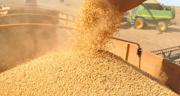 Produção brasileira de soja deverá ser recorde em 2016/2017