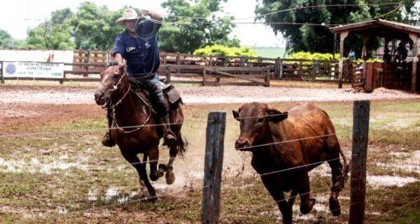 Sistema de controle integrado de animais destinados a eventos pecuários completa um ano
