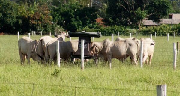 Suplementação de bovinos no período das águas