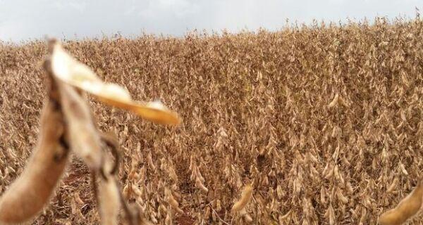 MS já colheu quase um quarto da área plantada com soja na safra 16/17