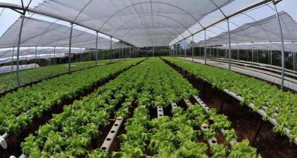 Bolívia busca experiência brasileira no apoio à agricultura familiar
