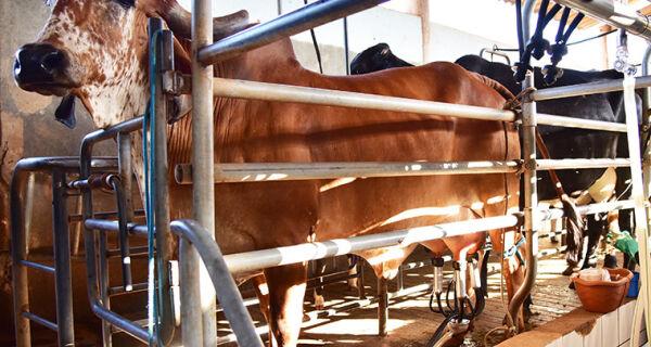 Bom momento para o leite em MS; Preços em alta