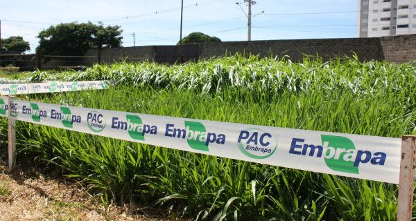 Embrapa apresenta novas forrageiras durante 79ª Expogrande