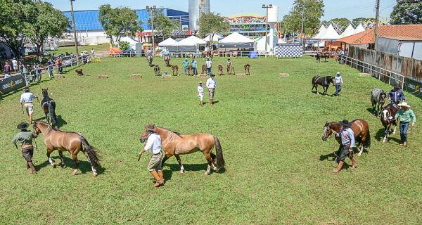 Passaporte do Cavalo Crioulo na Expogrande apresentou 87 animais no fim de semana