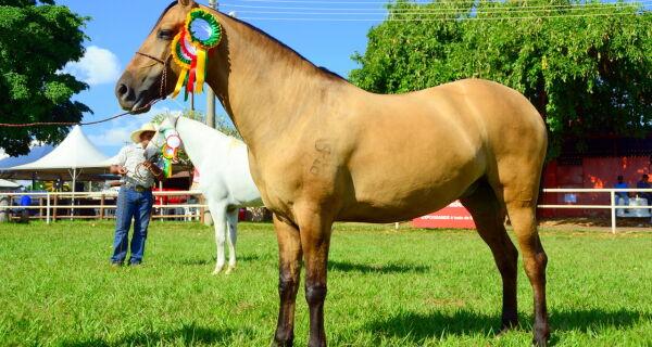 Criadores apresentam qualidades do Cavalo Pantaneiro na 79ª Expogrande