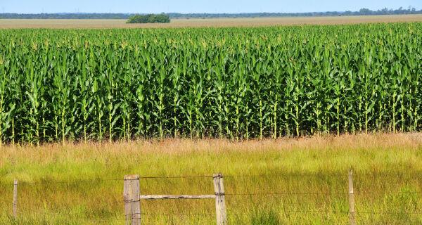 Agronegócio ganha impulso em Campo Grande com soja e milho