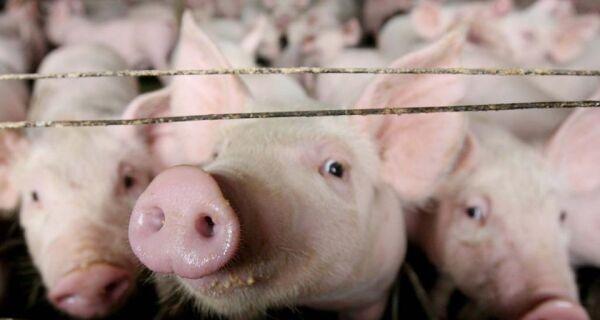 Produtores sentem 'na carne' variação dos preços de insumos