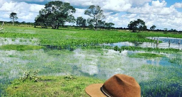 Pecuaristas precisam de planejamento para enfrentar seca e cheias no Pantanal