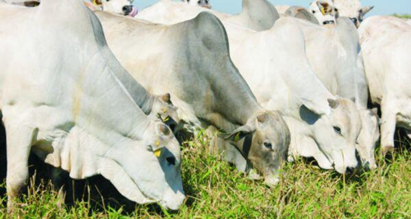 Criadores de MS mantêm o gado no pasto à espera de melhores preços