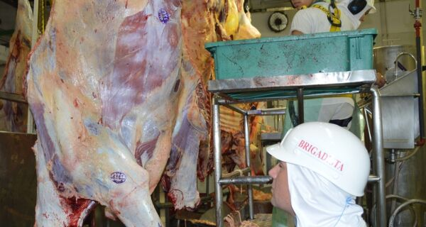 MS abateu quase 16 mil bovinos a menos no primeiro trimestre de 2017