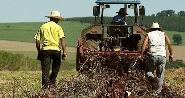 Agronegócio é setor que mais gerou empregos em Junho