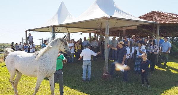 Cavalo árabe: 3ª edição do Leilão do Haras Engenho será no próximo sábado