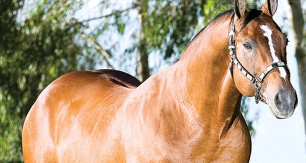Nutrição é fundamental para o bom desempenho de cavalos atletas