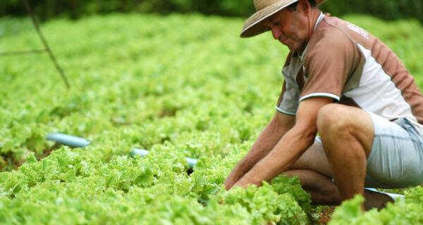 Agro gerou mais de 36,8 mil postos de trabalho em junho