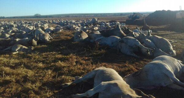 Mil e cem cabeças de gado morrem por suspeita de botulismo em fazenda de MS