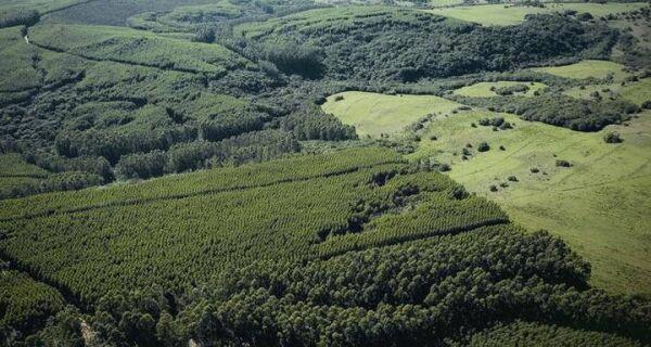 Multas ambientais serão pagas com serviços e compra de cotas