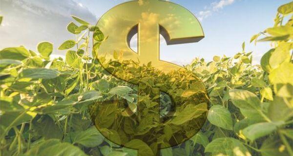 Seguro rural: governo libera R$ 90 milhões para culturas de verão e inverno