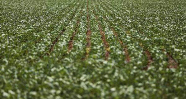 Área plantada de soja deve aumentar 3% na safra 2017/2018