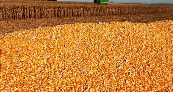 Milho: volume exportado em agosto dobrou