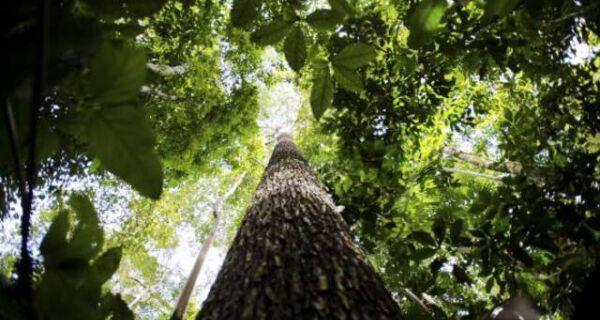 STF julgará legalidade do Código Florestal na próxima semana