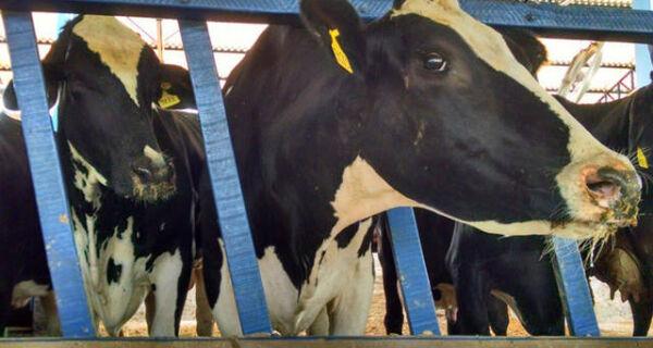Missão brasileira vai conhecer produção leiteira da Califórnia