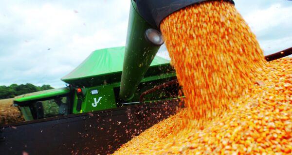 MS supera previsões e colhe maior safra de inverno de milho de sua história, 9,8 milhões de tonelada