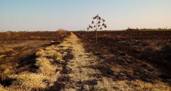 Incêndio no Parque das Várzeas do Rio Ivinhema (MS) já atingiu 27 mil hectares