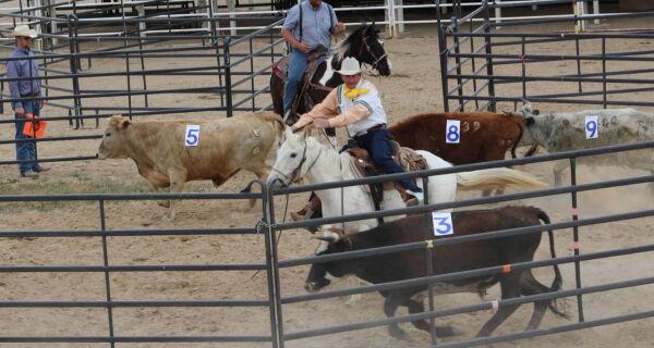 1ª Expoequestre começa com Clínica de Ranch Sorting