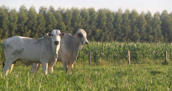 Embrapa lança calendário de manejos para bovinos