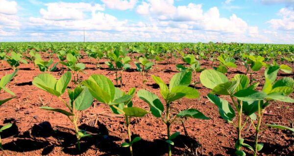 Plantio de soja avança e atinge 73% da área em 2017/18