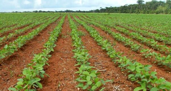 Soja: plantio da safra 2017/2018 atinge 84% da área no Brasil