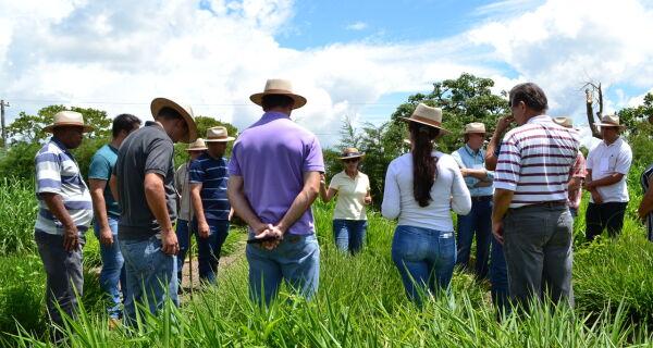 Parceria Agraer e Embrapa atenderá produtores de médio porte de MS