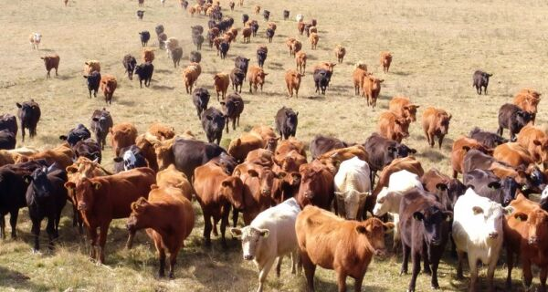 Carga viva: Brasil tem 100 mil bovinos em quarentena para exportação