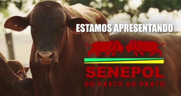 Assista neste sábado documentário no Canal Rural sobre o senepol
