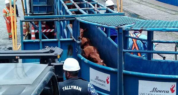 Venda de gado vivo cresce em meio a debate sobre bem-estar animal