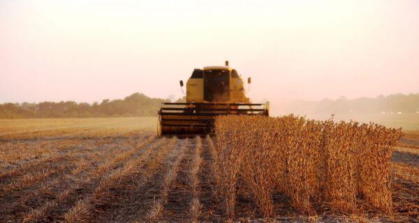 Colheita da soja avança em MS com alta produtividade e sem danos devido a chuva