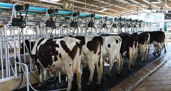 Margem da atividade leiteira melhorou em fevereiro