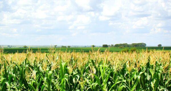 Milho: Produção de 2ª safra 2017/18 de milho ainda é incerta