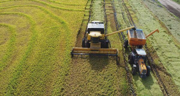 Plano Agrícola e Pecuário: Valor de R$ 188 bilhões será mantido para 2018/2019
