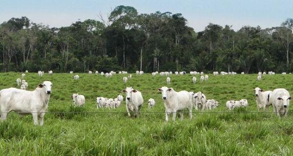 FPA aprova decisão do STF sobre constitucionalidade do Código Florestal