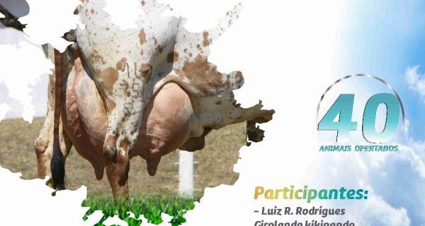 2º Leilão Girolando Pé no Chão acontece dia 8 na Expogrande