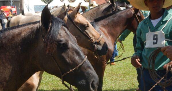 Sai resultado do julgamento morfológico e do laço técnico do cavalo pantaneiro