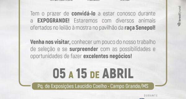 Leilão Pérolas do Senepol oferece 40 doadoras da raça na Expogrande 2018
