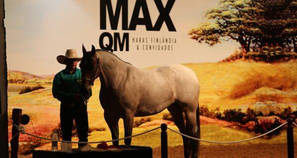 Leilão Max QM comercializa equinos por mais de R$ 170 mil na Expogrande