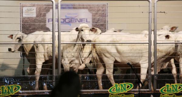 Leilão Reprodutores Progenel comercializa animais de qualidade